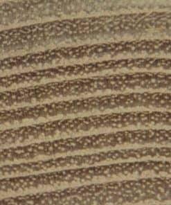 texture tranche Robinier Acacia