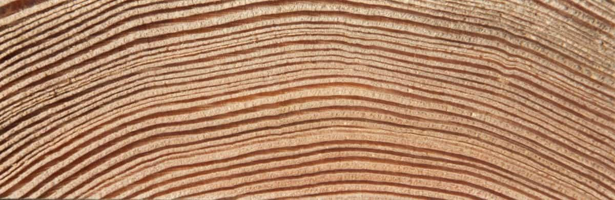 texture tranche Mélèze